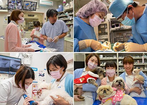 新卒獣医師さん募集!様々な症例来院します、有給消費率100%
