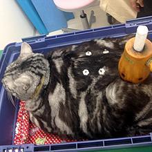 人で知られる鍼や灸。動物にもツボというものはあり用いることができます。東洋医学の観点からも治療のアプローチを可能とします。