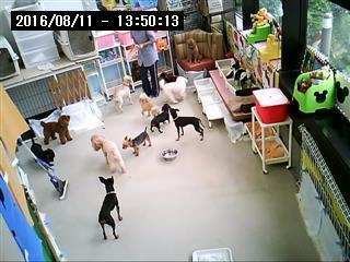 お預かり犬ライブ画像(毎日見ることが出来ます。)