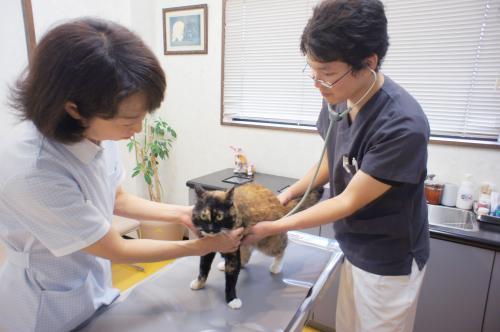 【獣医師募集!】静岡県浜松市の動物病院です。