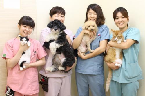 一般診療、行動診療、保護活動に取り組む動物病院、獣医師募集