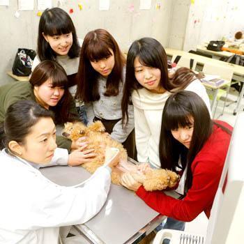 教職員募集!学生への動物看護業務指導