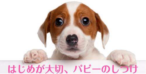 ドッグトレーナー大募集!!