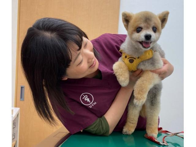 【オンライン面談可】<獣医師>東京都羽村市 やまの動物病院