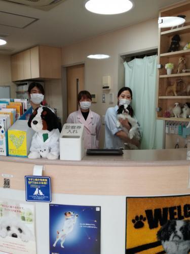【急募】動物看護師さん募集