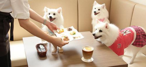 <ドッグカフェ>オープニングスタッフを募集!!