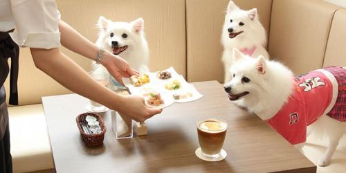 <オープニングスタッフ>ドッグカフェで一緒に働きませんか?
