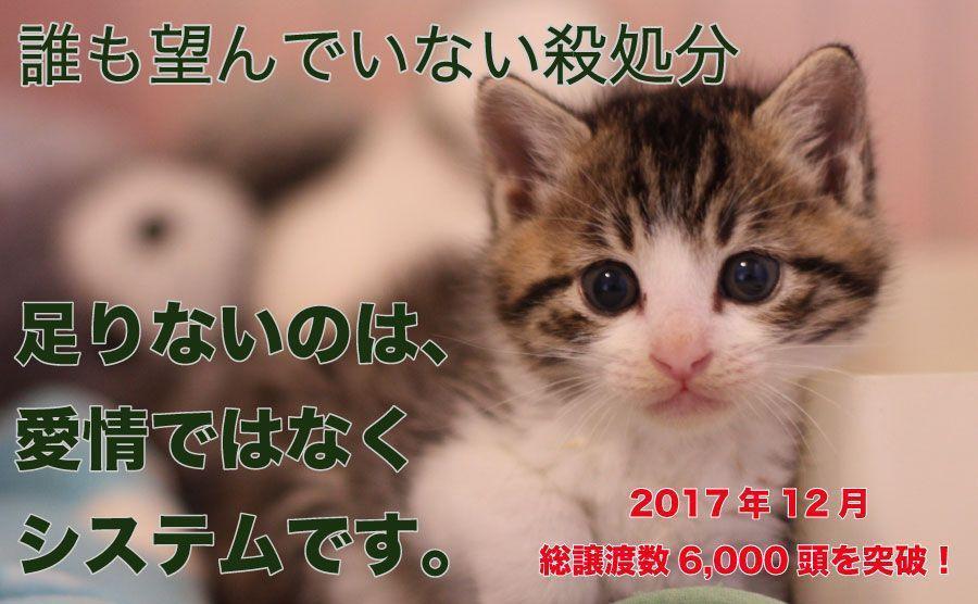 保護猫のための通販サイトスタッフ