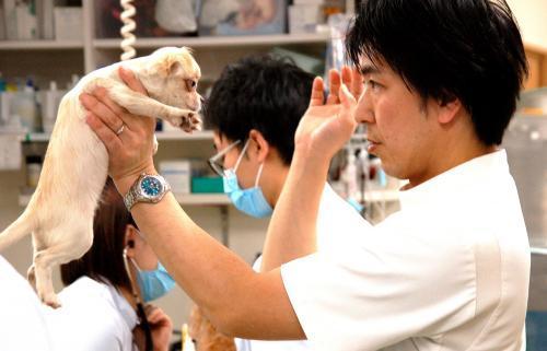 動物看護師【正社員募集】中の道動物病院本院